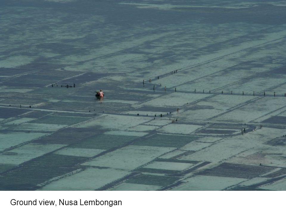 Ground view, Nusa Lembongan