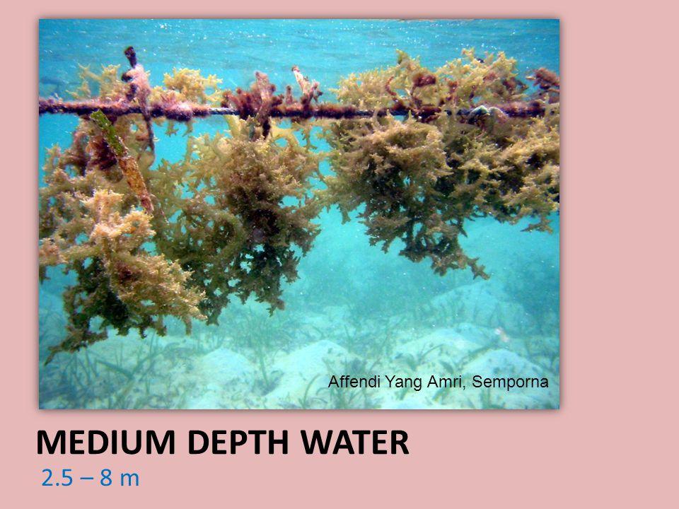 2.5 – 8 m MEDIUM DEPTH WATER Affendi Yang Amri, Semporna