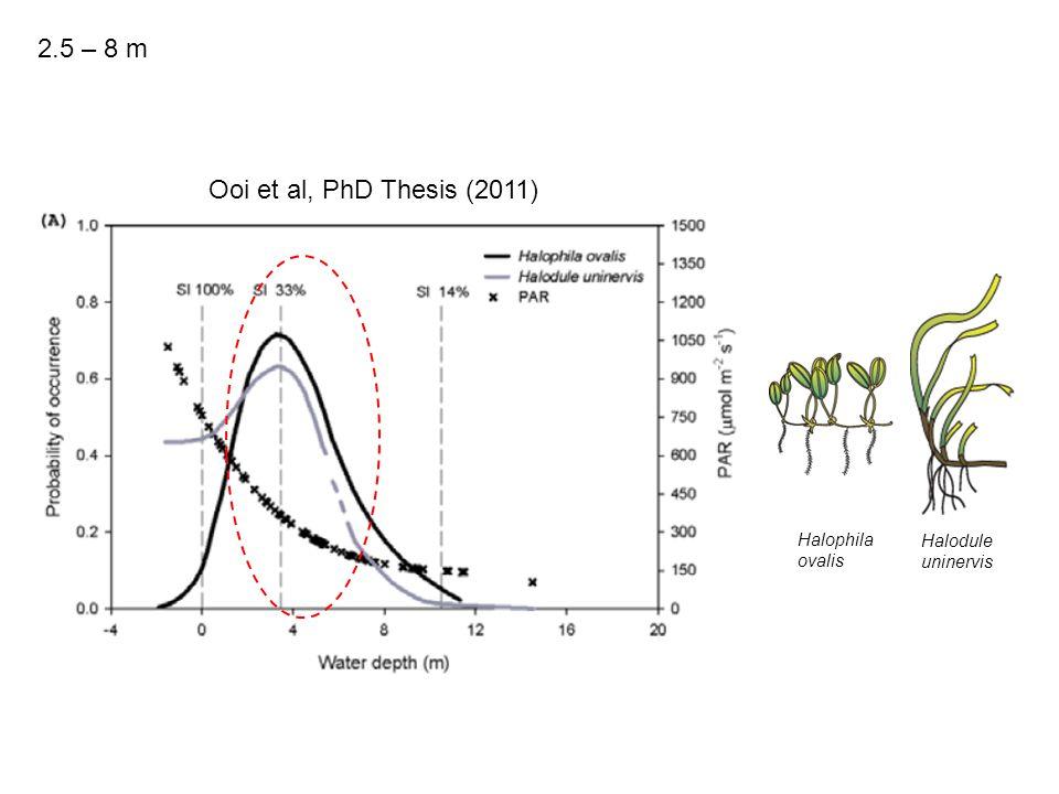 Ooi et al, PhD Thesis (2011) Halophila ovalis Halodule uninervis 2.5 – 8 m