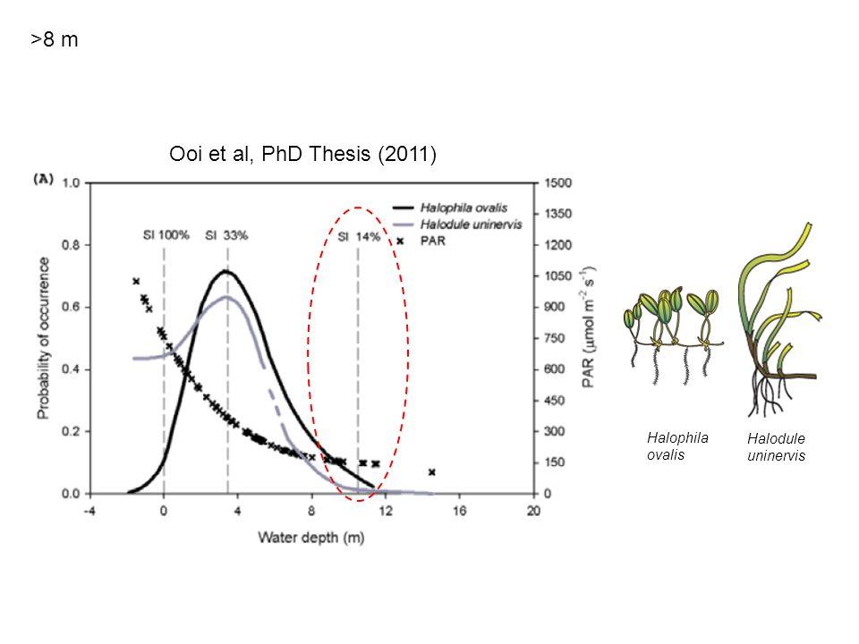 Halophila ovalis Halodule uninervis >8 m Ooi et al, PhD Thesis (2011)