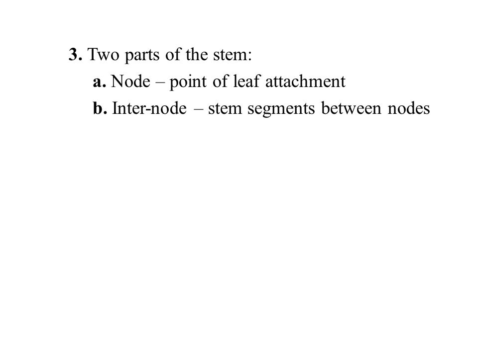 3. Two parts of the stem: a. Node – point of leaf attachment b. Inter-node – stem segments between nodes