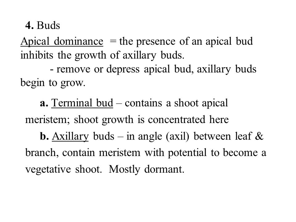 Apical dominance = the presence of an apical bud inhibits the growth of axillary buds. - remove or depress apical bud, axillary buds begin to grow. 4.