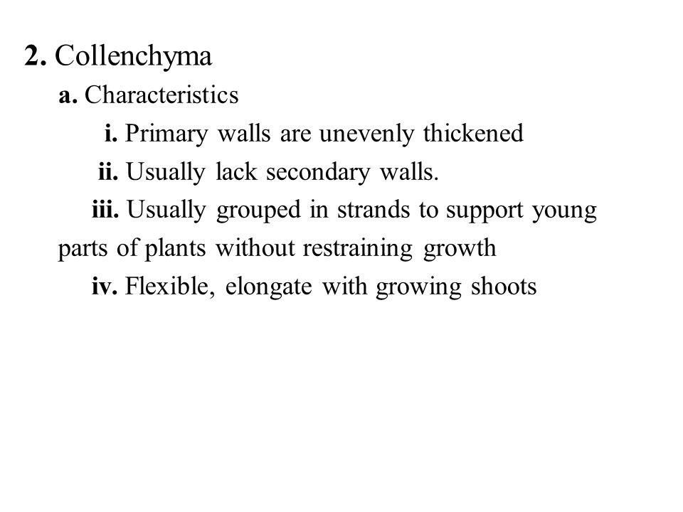 2. Collenchyma a. Characteristics i. Primary walls are unevenly thickened ii. Usually lack secondary walls. iii. Usually grouped in strands to support