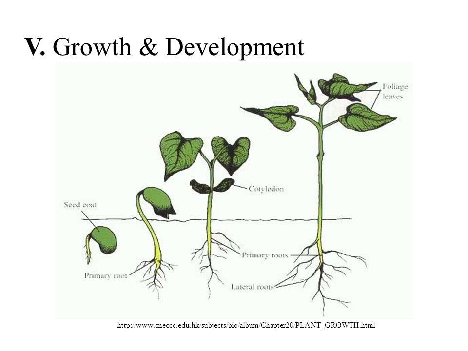 http://www.cneccc.edu.hk/subjects/bio/album/Chapter20/PLANT_GROWTH.html V. Growth & Development