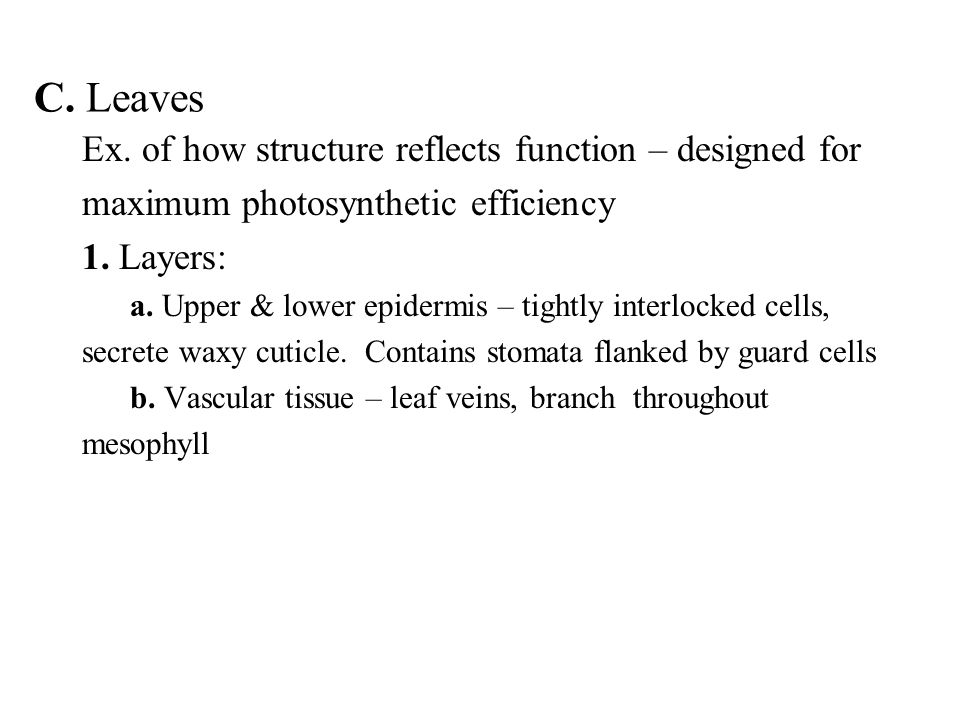 C. Leaves Ex. of how structure reflects function – designed for maximum photosynthetic efficiency 1. Layers: a. Upper & lower epidermis – tightly inte