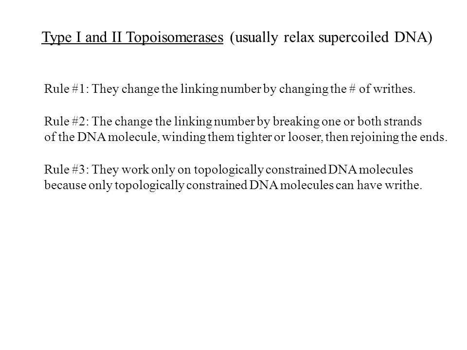Type I and II Topoisomerases (usually relax supercoiled DNA) Rule #1: They change the linking number by changing the # of writhes.