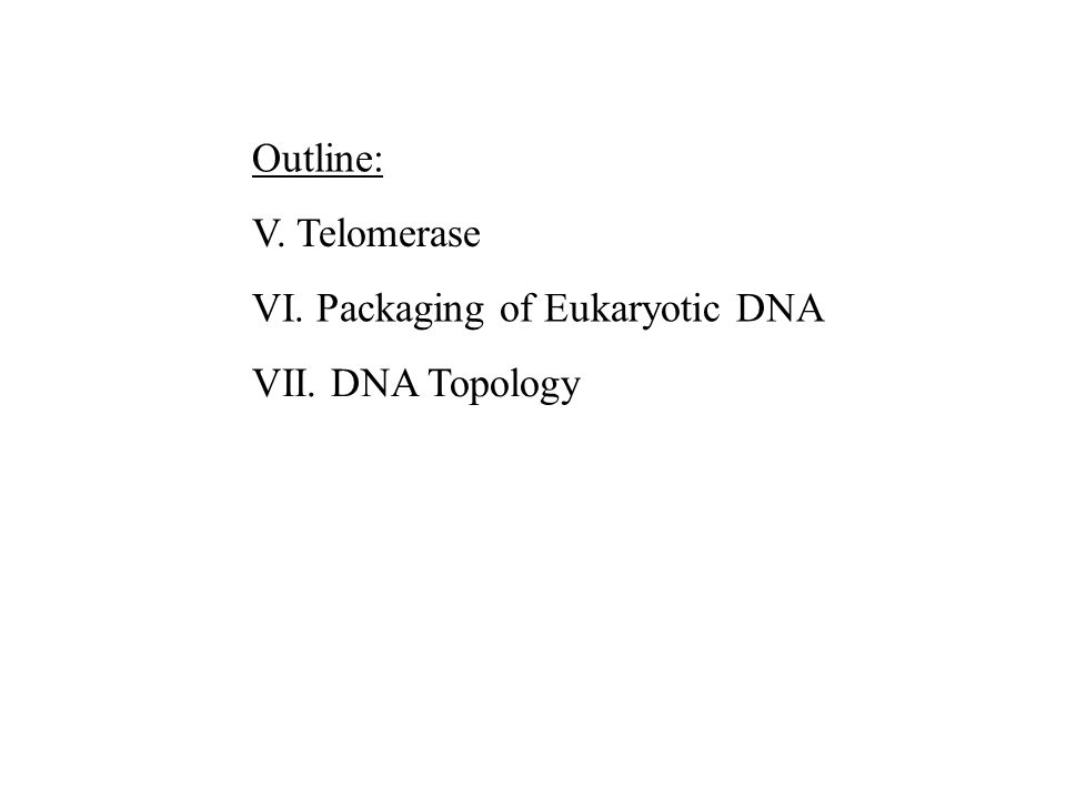 Outline: V. Telomerase VI. Packaging of Eukaryotic DNA VII. DNA Topology