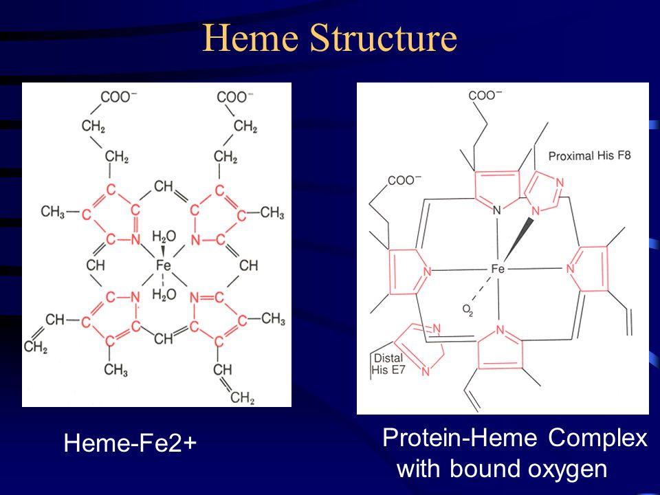 Heme-Fe2+ Protein-Heme Complex with bound oxygen Heme Structure