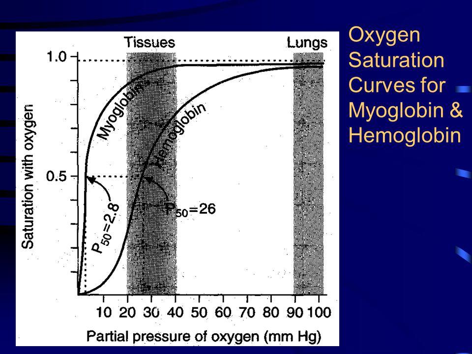 Oxygen Saturation Curves for Myoglobin & Hemoglobin