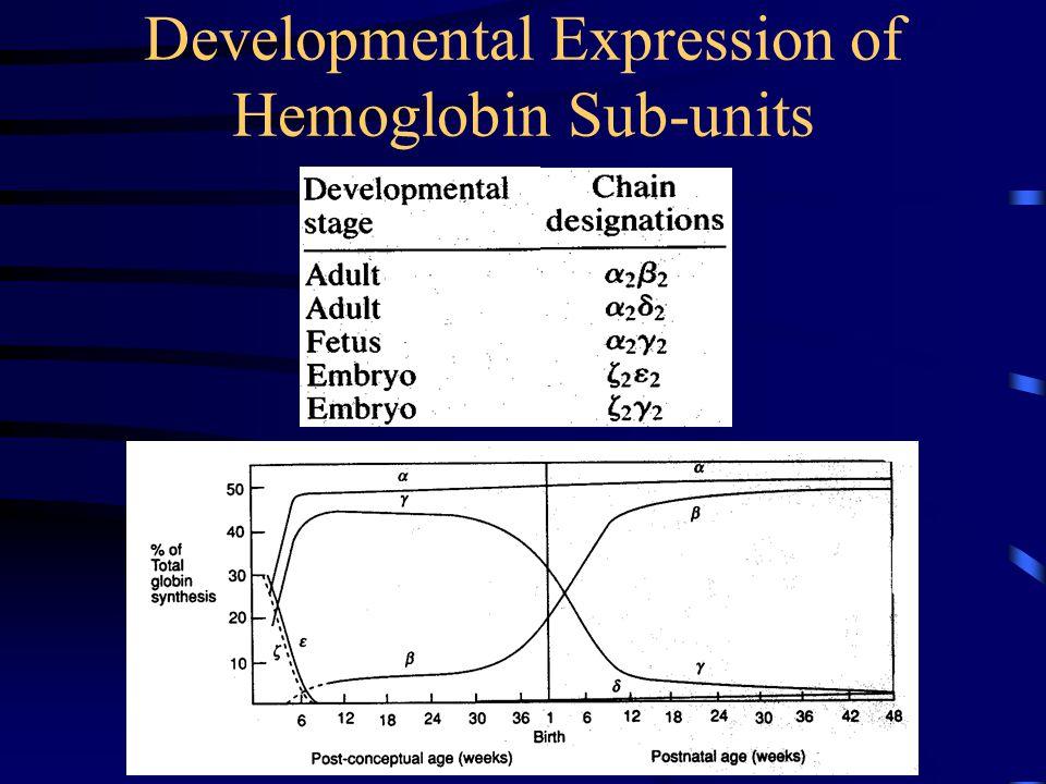 Developmental Expression of Hemoglobin Sub-units