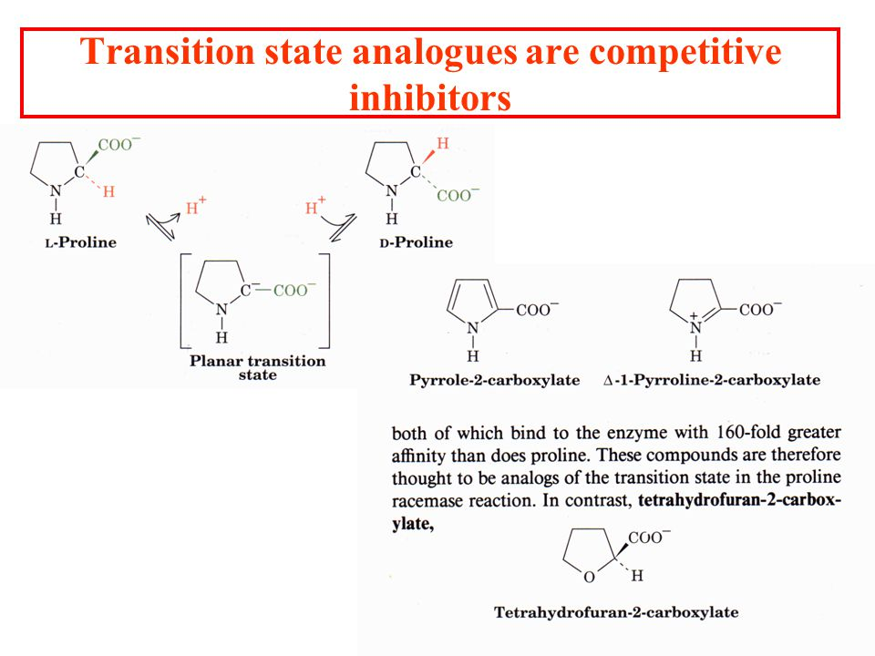 Transition state analogues are competitive inhibitors