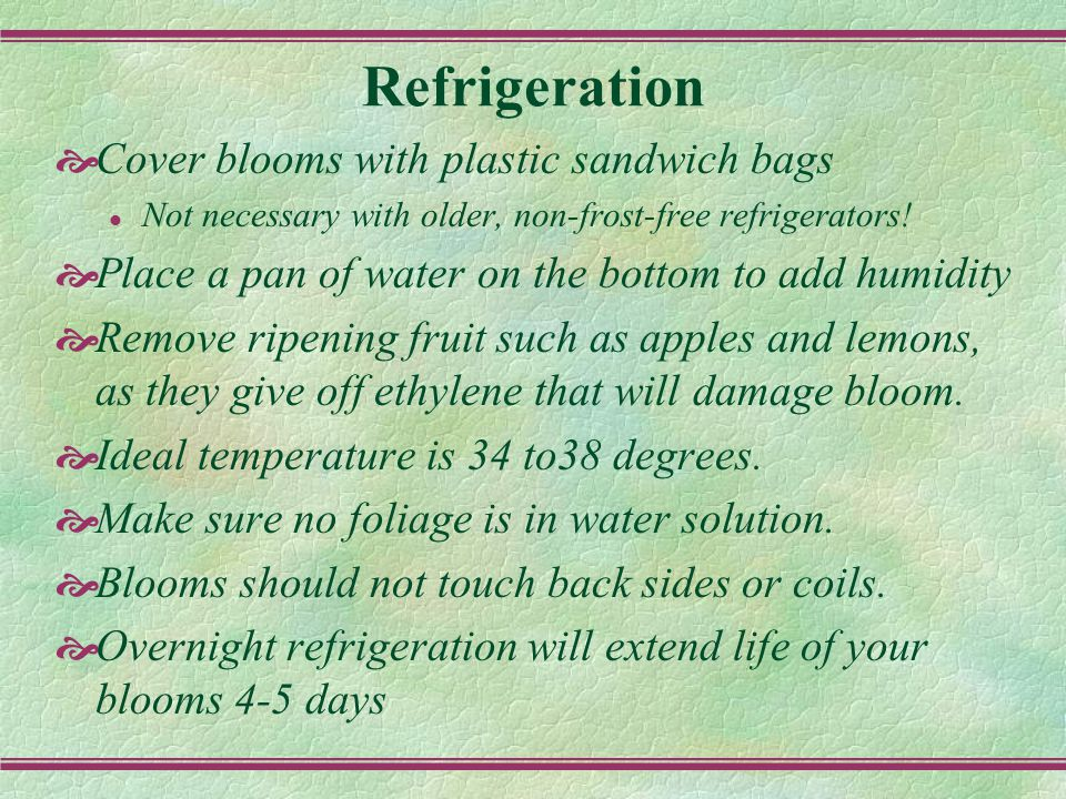 Refrigeration  Cover blooms with plastic sandwich bags l Not necessary with older, non-frost-free refrigerators.