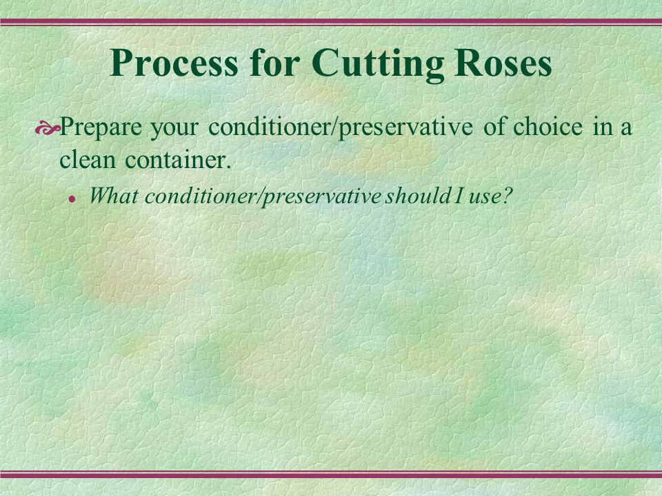 Process for Cutting Roses  Prepare your conditioner/preservative of choice in a clean container.