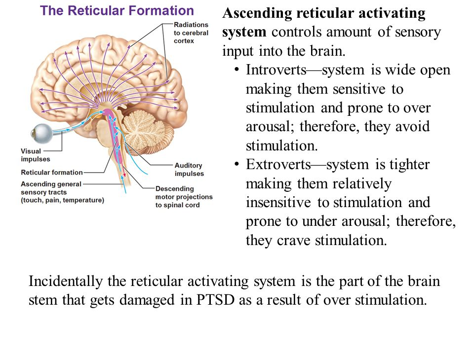 Ascending reticular activating system controls amount of sensory input into the brain.