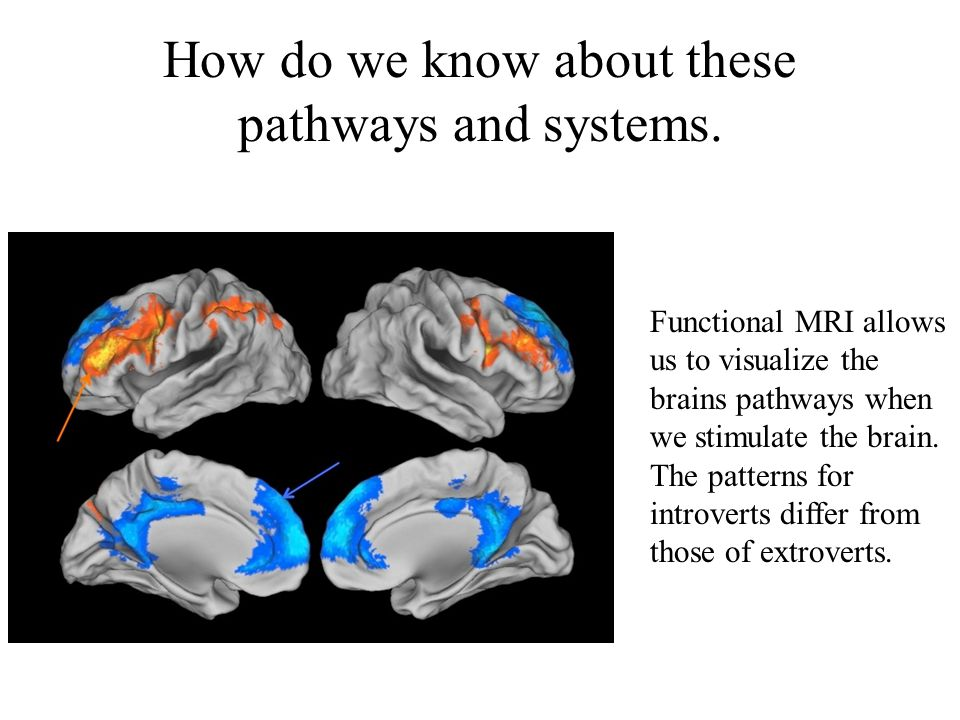 How do we know about these pathways and systems. Functional MRI allows us to visualize the brains pathways when we stimulate the brain. The patterns f