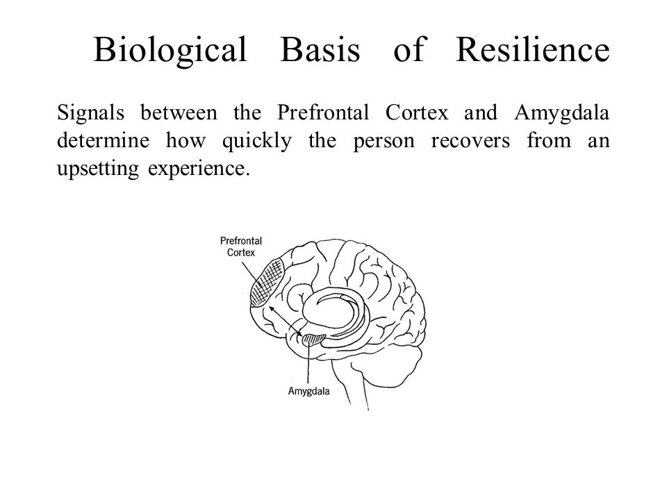 Biological Basis of Resilience Signals between the Prefrontal Cortex and Amygdala determine how quickly the person recovers from an upsetting experience.