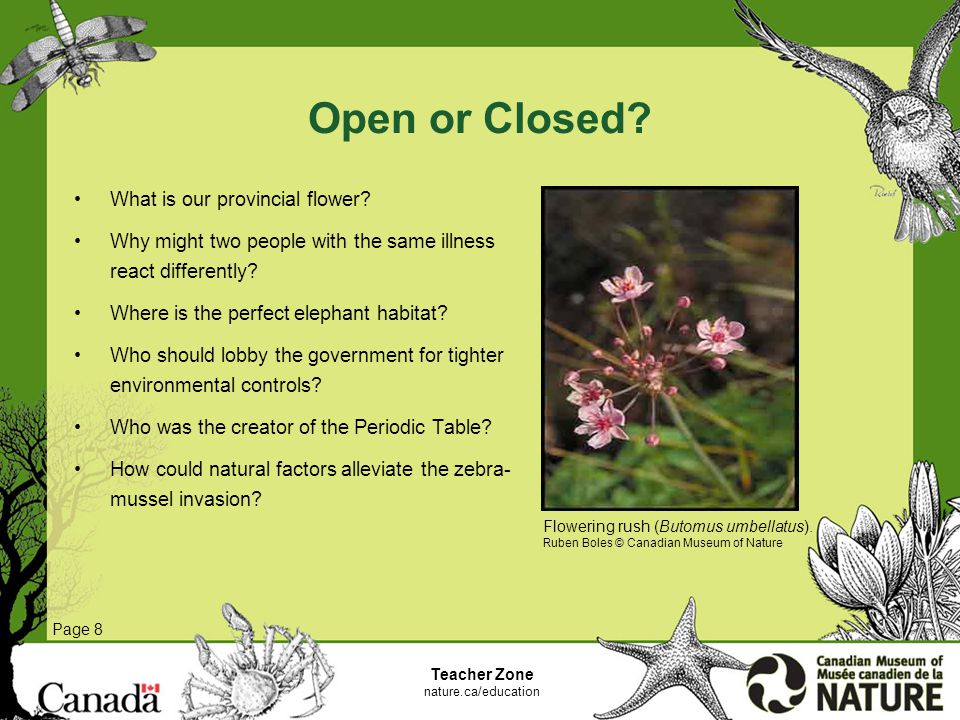 Open or Closed. What is our provincial flower.