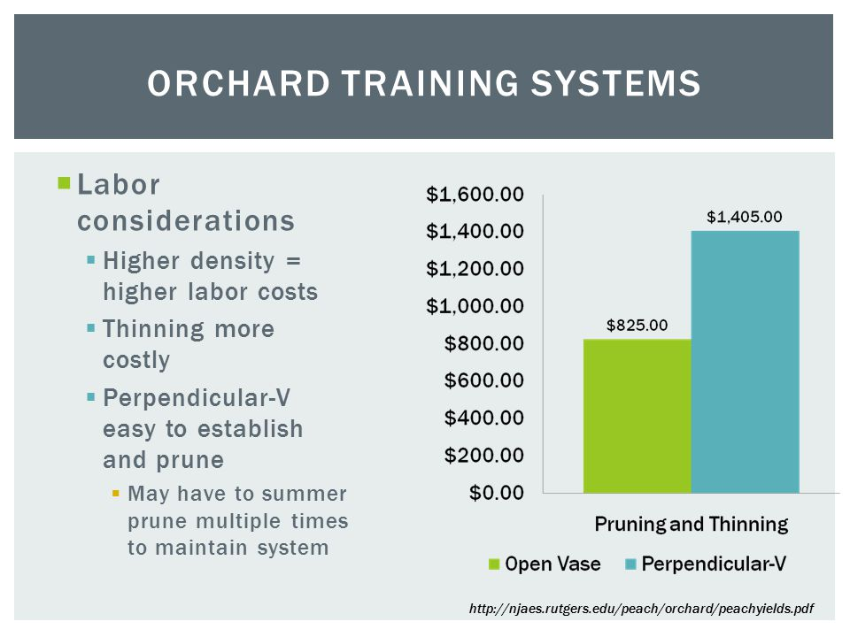 Labor considerations  Higher density = higher labor costs  Thinning more costly  Perpendicular-V easy to establish and prune  May have to summer prune multiple times to maintain system ORCHARD TRAINING SYSTEMS
