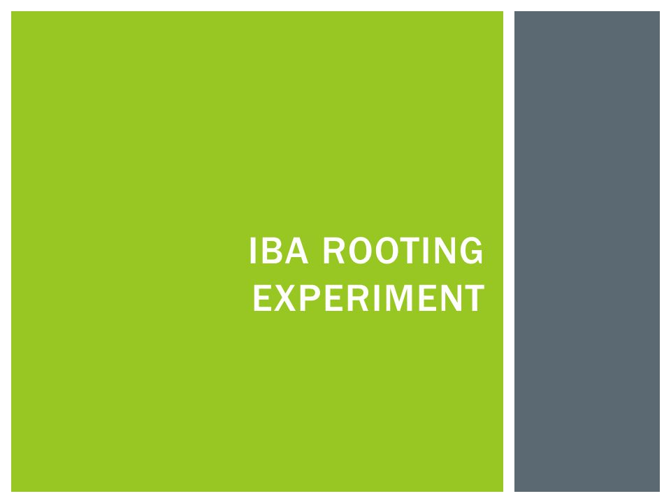 IBA ROOTING EXPERIMENT
