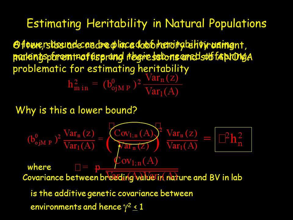 Estimating Heritability in Natural Populations Often, sibs are reared in a laboratory environment, making parent-offspring regressions and sib ANOVA p