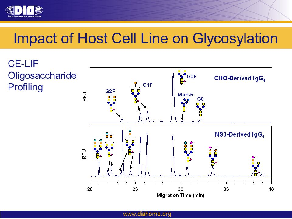 www.diahome.org Impact of Host Cell Line on Glycosylation CE-LIF Oligosaccharide Profiling