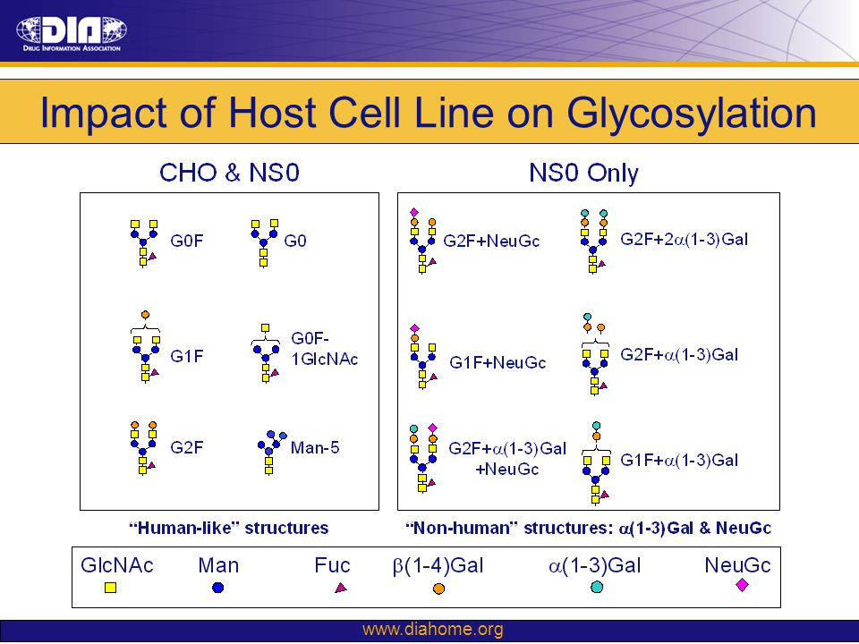www.diahome.org Impact of Host Cell Line on Glycosylation