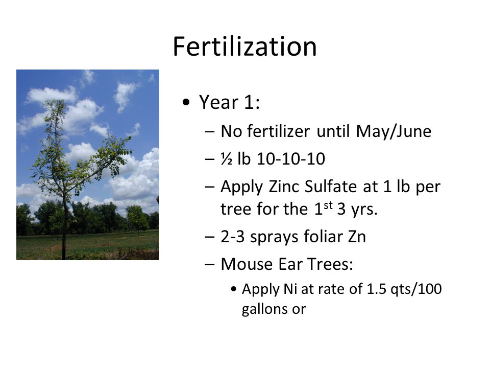 Fertilization Year 1: –No fertilizer until May/June –½ lb 10-10-10 –Apply Zinc Sulfate at 1 lb per tree for the 1 st 3 yrs.