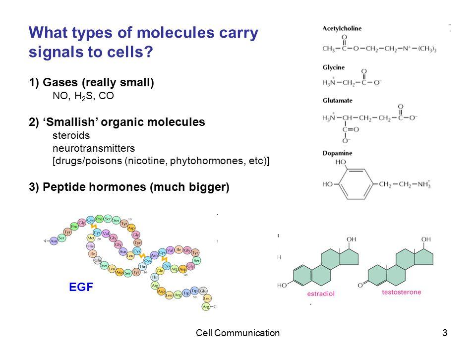 Cell Communication14 RTK Signaling often occurs through Ras A monomeric GTP-binding protein RAS activates a kinase cascade (MAP Kinase module)