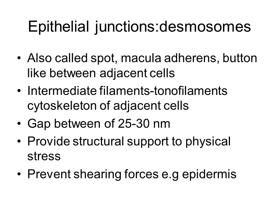 Epithelial junctions:desmosomes Also called spot, macula adherens, button like between adjacent cells Intermediate filaments-tonofilaments cytoskeleton of adjacent cells Gap between of 25-30 nm Provide structural support to physical stress Prevent shearing forces e.g epidermis