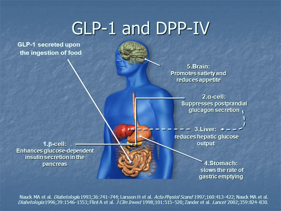 GLP-1 and DPP-IV Nauck MA et al. Diabetologia 1993;36:741–744; Larsson H et al. Acta Physiol Scand 1997;160:413–422; Nauck MA et al. Diabetologia 1996