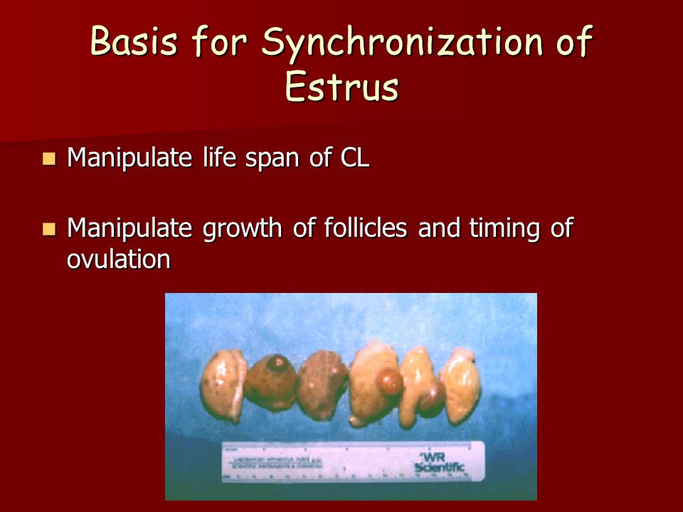 Basis for Synchronization of Estrus Manipulate life span of CL Manipulate life span of CL Manipulate growth of follicles and timing of ovulation Manipulate growth of follicles and timing of ovulation