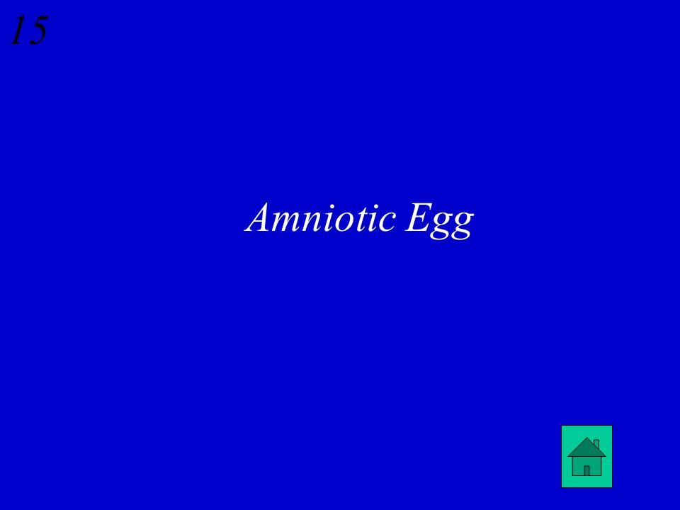 14 Amphibians show the following adaptations to living on land except a. Development of lungs b. Mucous covering across skin c. Amniotic egg d. 3-cham