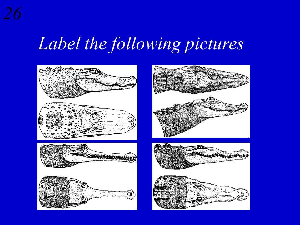 25 Rattlesnakes – Hemotoxin Coral Snakes – Neurotoxin