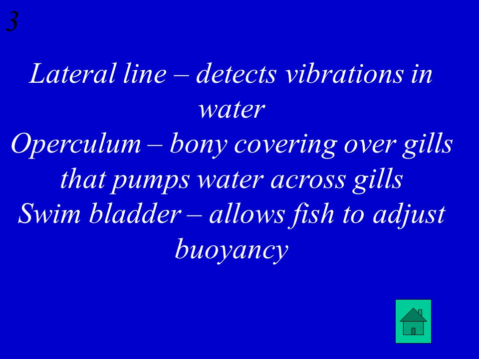 Osteichthyes: Define lateral line, operculum, & swim bladder 2