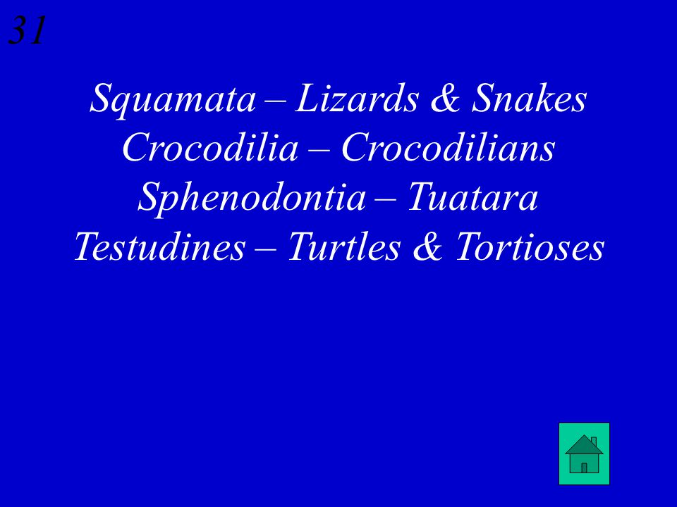 30 What kinds of reptiles are in the following Orders: Squamata Crocodilia Sphenodontia Testudines