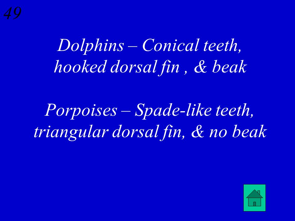 48 What are three differences between dolphins & porpoises