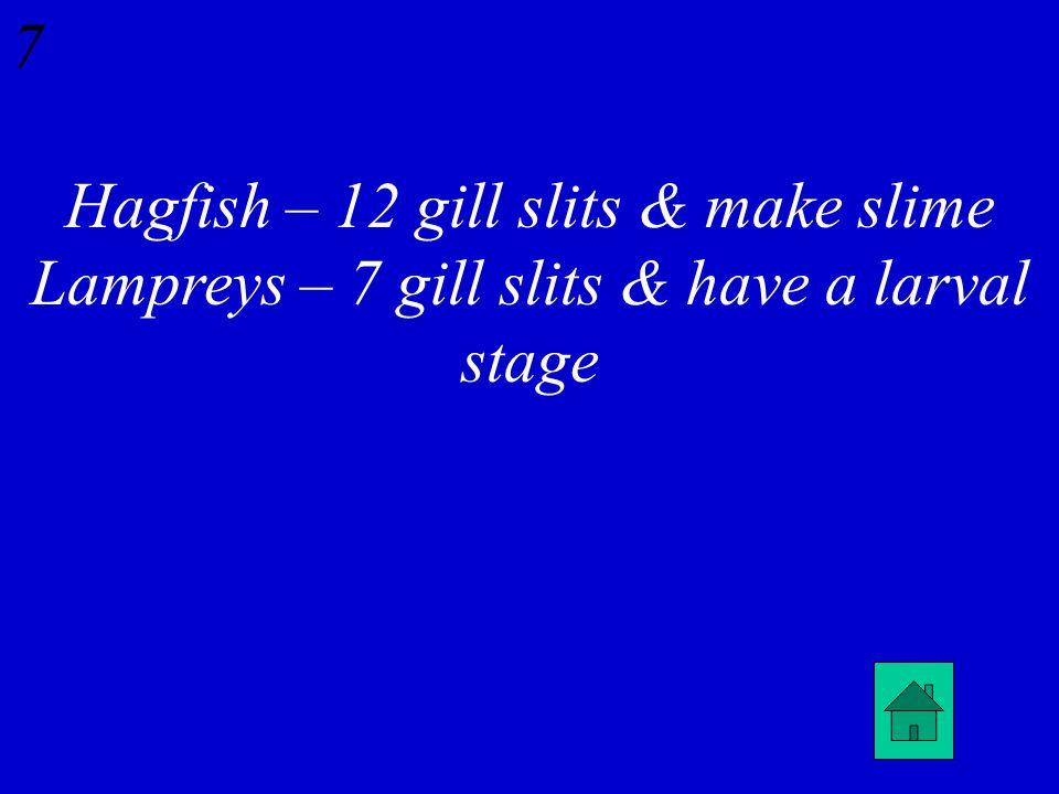 6 Agnatha: Name two differences between hagfish & lampreys