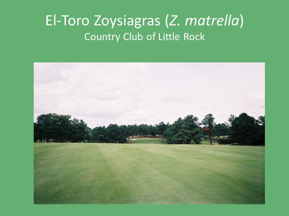 El-Toro Zoysiagras (Z. matrella) Country Club of Little Rock