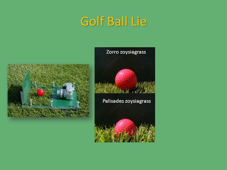 Golf Ball Lie Zorro zoysiagrass Palisades zoysiagrass Zorro zoysiagrass: 98% ball exposed Palisades zoysiagrass: 73% ball exposed