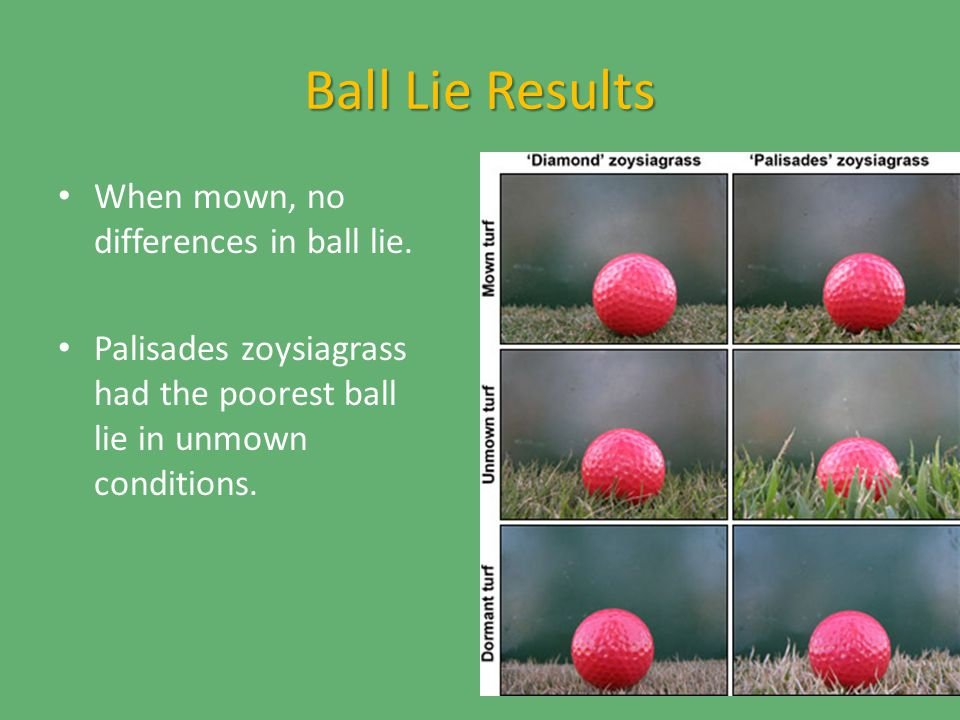 Ball Lie Results When mown, no differences in ball lie.