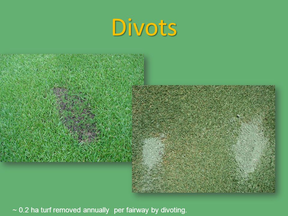 Divots ~ 0.2 ha turf removed annually per fairway by divoting.