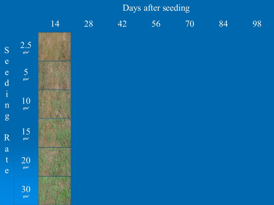 Days after seeding Seeding RateSeeding Rate 14284256708498 2.5 g/m 2 5 g/m 2 10 g/m 2 15 g/m 2 20 g/m 2 30 g/m 2