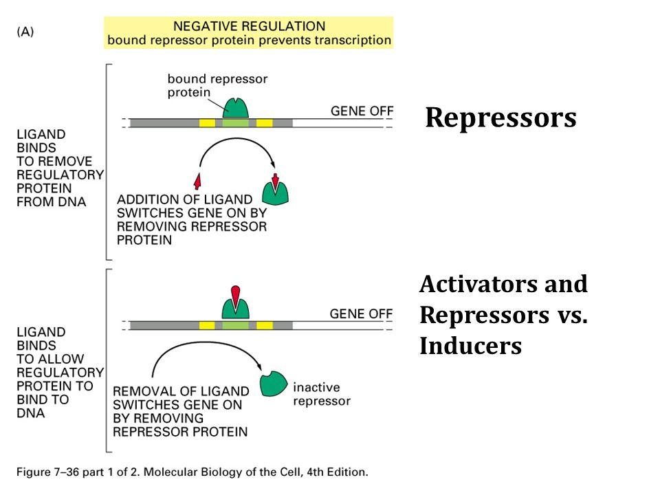 Repressors Activators and Repressors vs. Inducers