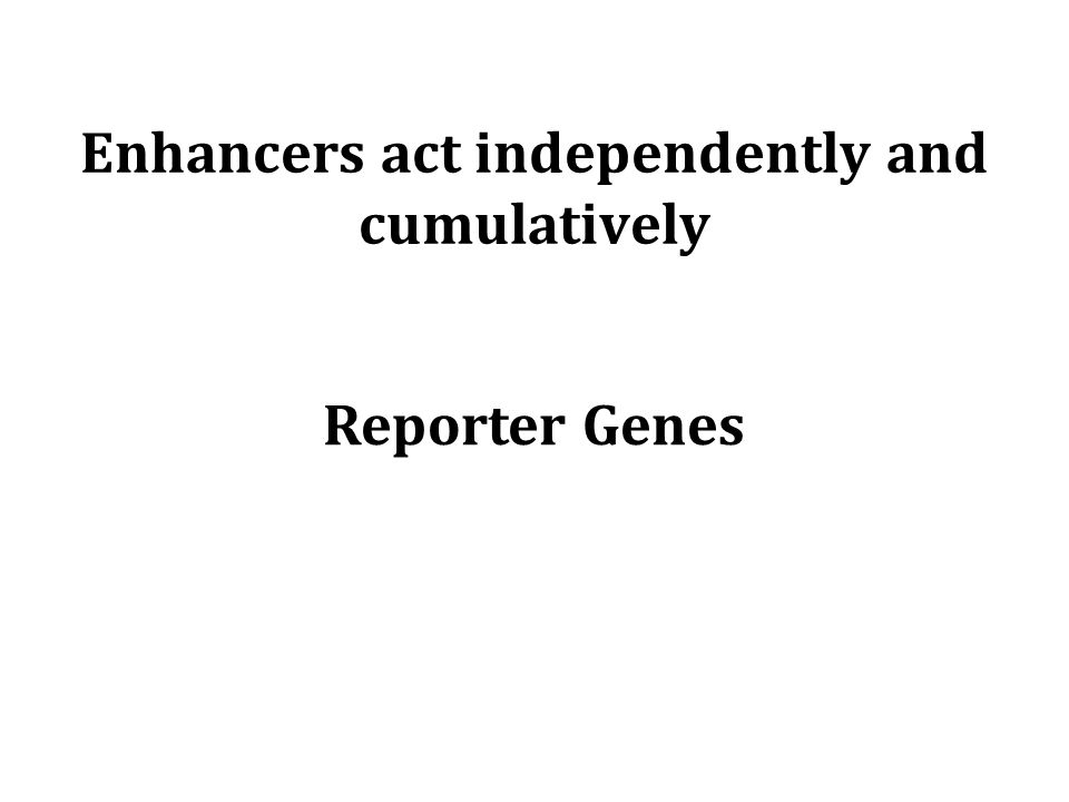 Enhancers act independently and cumulatively Reporter Genes