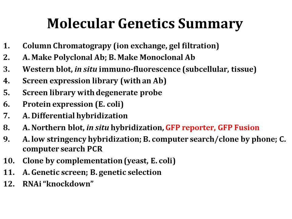 Molecular Genetics Summary 1.Column Chromatograpy (ion exchange, gel filtration) 2.A.