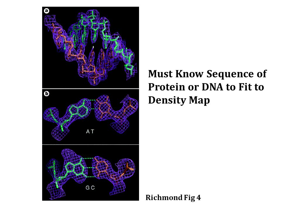 Richmond Fig 4 Must Know Sequence of Protein or DNA to Fit to Density Map