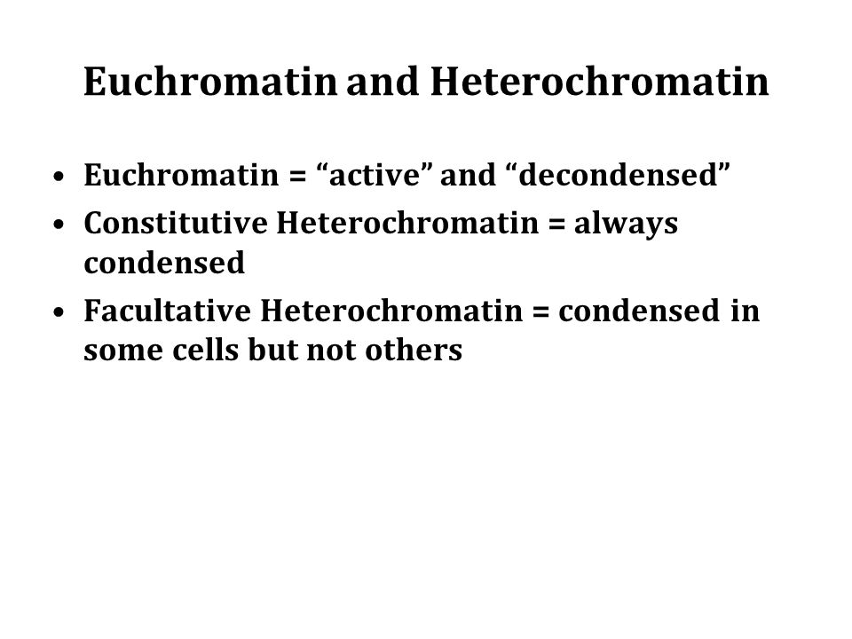 Euchromatin and Heterochromatin Euchromatin = active and decondensed Constitutive Heterochromatin = always condensed Facultative Heterochromatin = condensed in some cells but not others