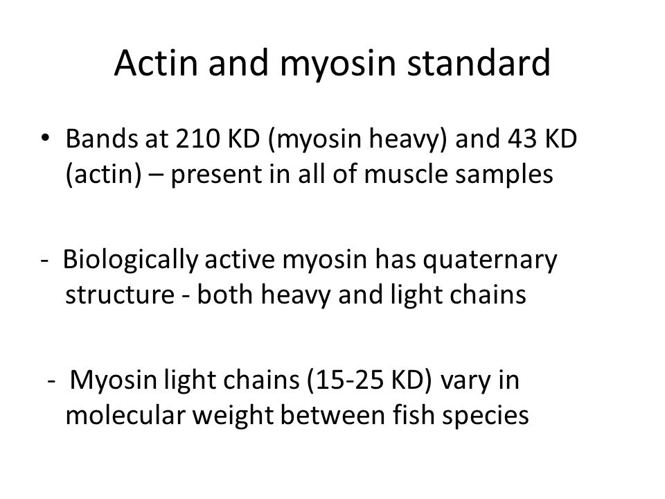 Actin and myosin standard Bands at 210 KD (myosin heavy) and 43 KD (actin) – present in all of muscle samples - Biologically active myosin has quatern
