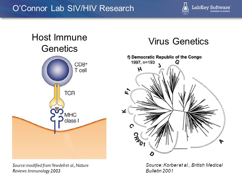 Source: modified from Yewdell et al., Nature Reviews Immunology 2003 Host Immune Genetics  MHC class I molecules dictate immunity to disease  High degree of polymorphism within the MHC class I peptide-binding domain  Specific MHC alleles associated with superior control of HIV infection Importance of MHC Class I