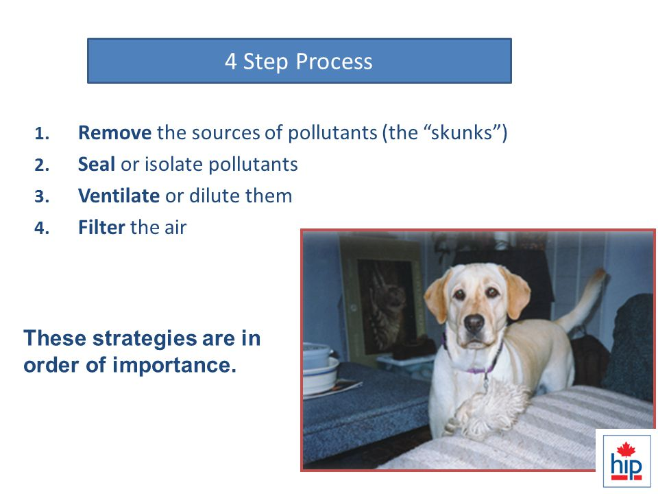 Solution Strategies 1. Remove the sources of pollutants (the skunks ) 2.